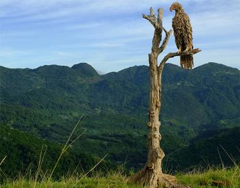A driftwood and stainless steel sculpture of an Eagle perched in a tree