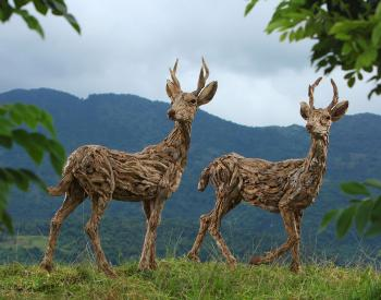 Scrutiny and Apprehension. Driftwood and stainless steel sculptures of two roe buck